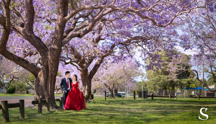 Wedding photo under the Jacaranda !!!